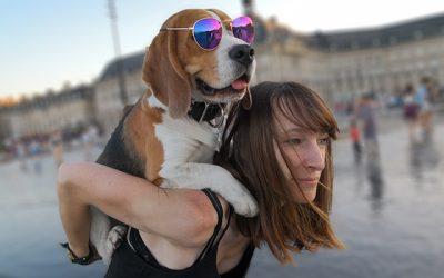 Marvel ze Super Beagle : La Success Story d'une Dog Influenceuse